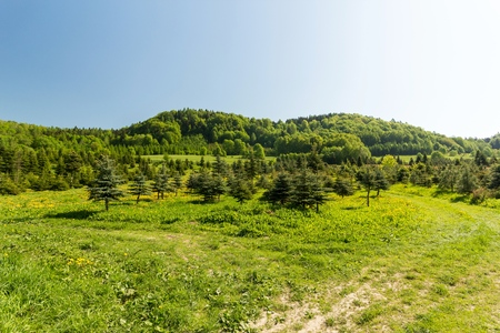 Green spring meadow in mountains, composition of nature Zdjęcie Seryjne