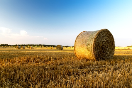 Rural morning landscape with golden straw bales and blue sky Reklamní fotografie