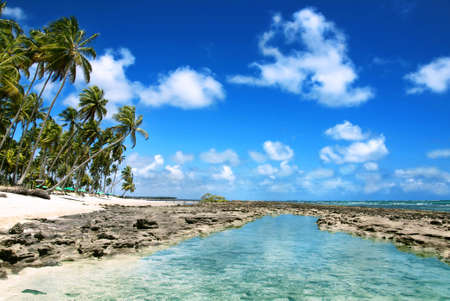 Big Reef and Natural Pool in Brazil photo
