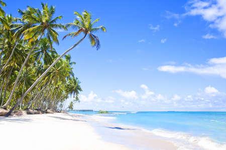 Tropical Beach in Brazil, Carneiros Beach, Pernambuco photo