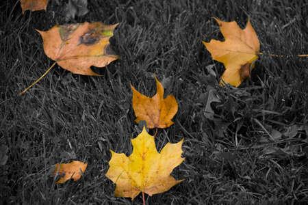 Fall colours Stok Fotoğraf