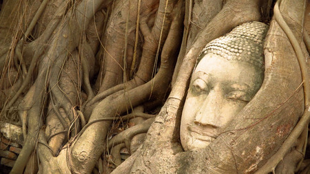 Ancient Buddhism head in root at Thailand