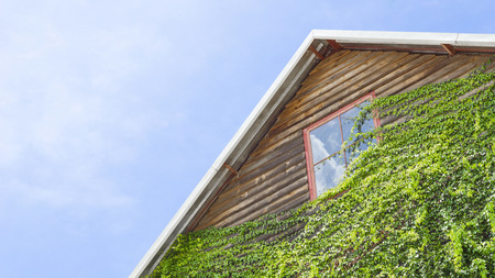 Wood house with ivy plants and blue sky Standard-Bild
