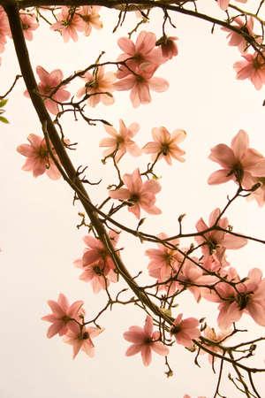Blossum in Pastle hues...