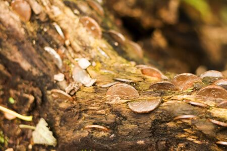 Coins stuffed into an old log in the woods. photo