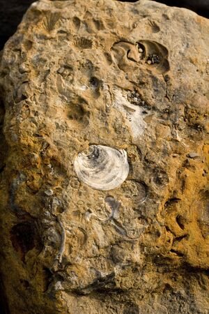 Rocks with embeded fossils in Whitby Stock Photo