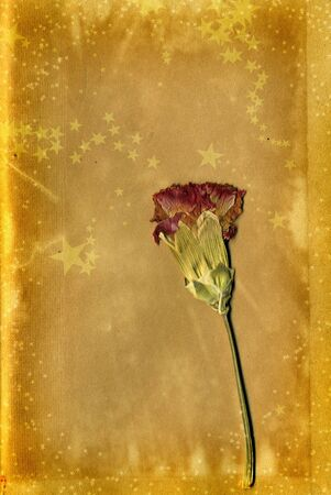 Festive Party Christmas Card background with Pressed flower... Have a very grungy Christmas photo