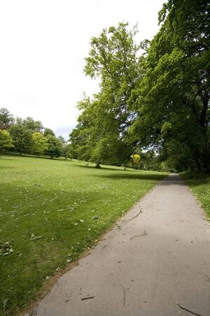 Fresh green trees and path in the park, wide angle shot.