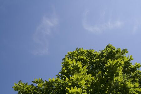 Fresh green tree leaves on blue sky background Stock Photo