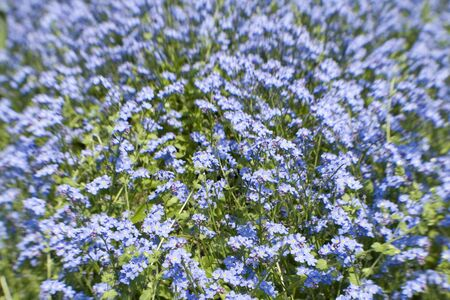 Lensbaby Shot of bright blue flowers, colourful background, intentional blur and focus point. Stock Photo