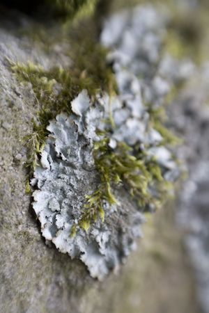 Close-up of Lichen on rocks shot with sweetspot lens.