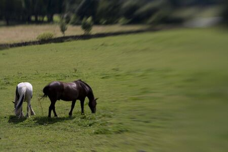 Horse in green Field shot with sweetspot lens. Stock Photo