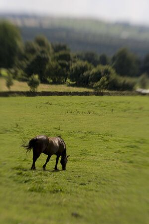 Horse in green Field shot with sweetspot lens. Stock Photo - 5870002