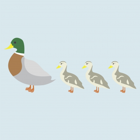 Illustration of duck and 3 cute duckling Stock Vector - 17818738