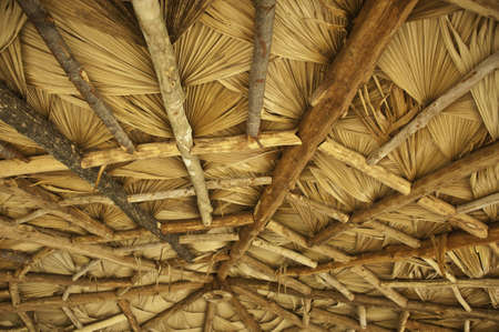 thatched: Thatched roof in countryside