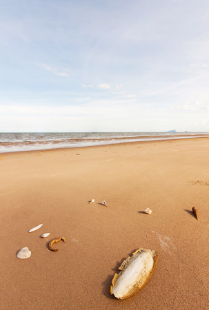 caballo de mar: hueso de sepia y caballito de mar y concha en la arena en la naturaleza
