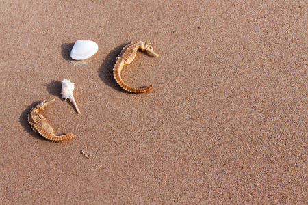 sea horse and shell on sand in nature under sunlight Stock Photo