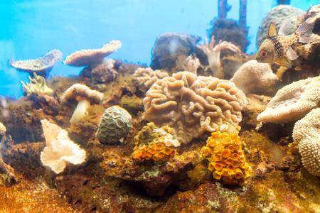 clima tropical: Anémonas están ampliamente distribuidos en la naturaleza, Submarino en Tropical