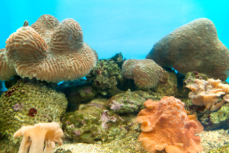 exoticism saltwater fish: Anemones are widely distributed in the wild, Undersea in Tropical Climate