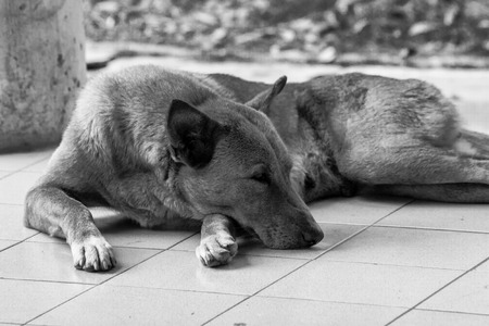 dismal: Lonely dog missing its owner. Black and white photograph. Stock Photo