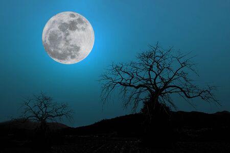 arboles secos: luna llena en el cielo de fondo azul oscuro una silueta y �rboles muertos secos