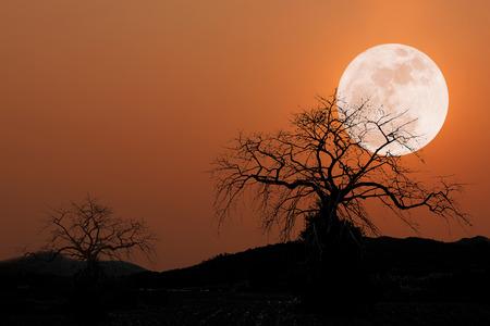arboles secos: luna llena en el cielo de fondo de color rojo oscuro y una silueta árboles muertos secos