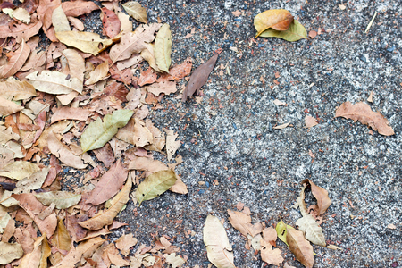 vanishing point: Dry brown the leaves on concrete in winter Stock Photo