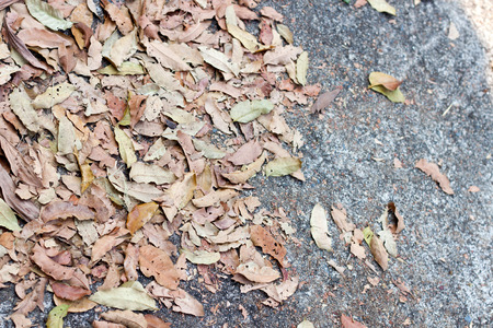 filming point of view: Dry brown the leaves on concrete in winter Stock Photo