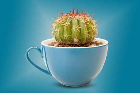 background blue: cactus in coffee cup. it is idea beverage bad taste similar options like cactus. isolated on blue background with clipping paths.