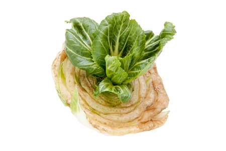 nappa: Chinese cabbage. Slicing vegetables edgewise and the germination of the crop. Isolated On White with clipping paths.