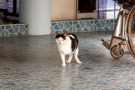 legged: cat three legged with disabilities and wheelchairs Stock Photo