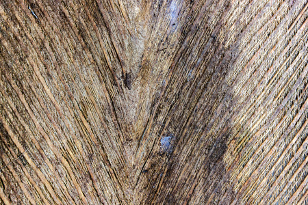 dry leaf: bark the petiole dry bract or old leaf coconut. brown color and dry skin texture mesh nature.