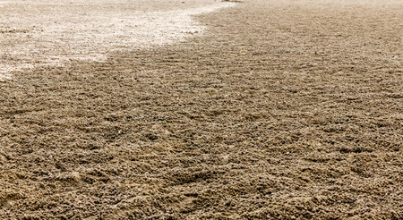 full of holes: Sand pellets made by sand bubbler crabs blankets a beach at low tide in tropical Stock Photo