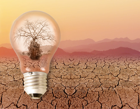 energy use: dead dry tree in a light bulb. on drought dry skin and sky orange color in summer. concept and idea relating to the use of energy.
