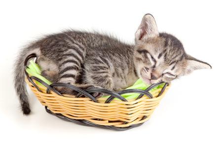 gray tabby: gray tabby kitten sleeping in a little basket on white background