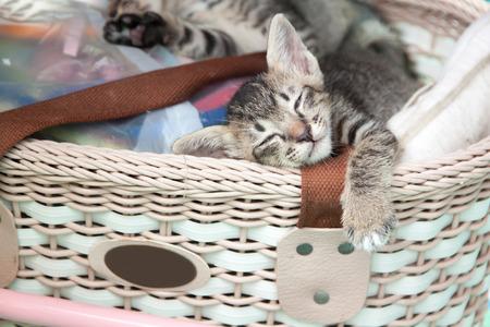 gray tabby: gray tabby kitten sleeping in a basket Stock Photo