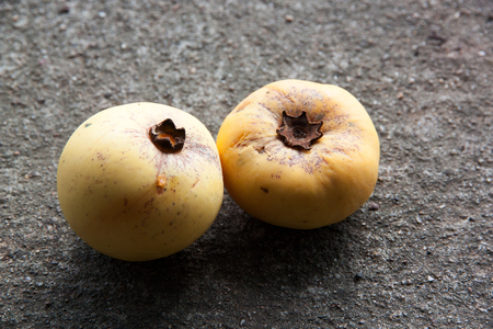 ebenaceae: Gold Apple Fruit, Diospyros decandra Lour fruit ( Ebenaceae ) with on the concrete background.Thai tropical fruit and Thai herb.