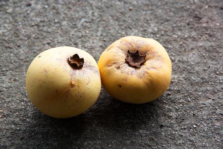 ebenaceae: Gold Apple Fruit, Diospyros decandra Lour fruit ( Ebenaceae ) with on the concrete background.Thai tropical fruit and Thai herb.