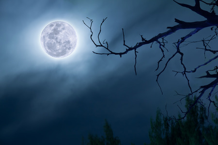 dramatics: full moon in dark blue sky background a silhouette and dry dead trees. Stock Photo