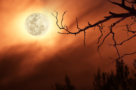 full moon in dark red sky background a silhouette and dry dead trees.