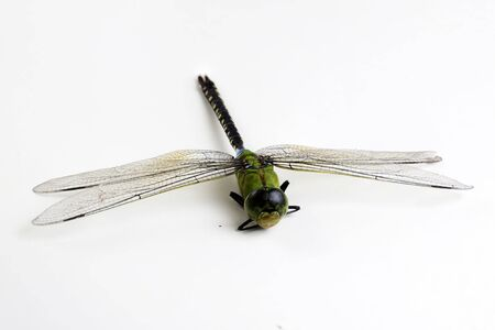 darning needle: Dragonfly green and black color on white background
