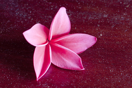 low key lighting: Red Plumeria on the red wood, low key lighting of red frangipani tropical flowers.