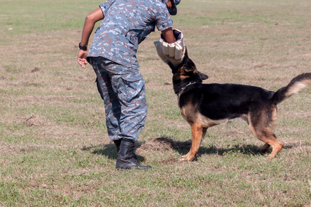 sniffer: Soldiers from the K-9 dog unit works with his partner to apprehend a bad guy during a demonstration