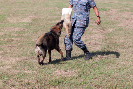 apprehend: Soldiers from the K-9 dog unit works with his partner to apprehend a bad guy during a demonstration