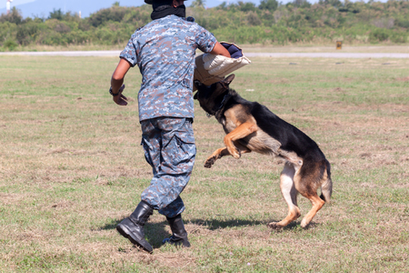 Soldiers from the K-9 dog unit works with his partner to during a demonstration Training Stock Photo