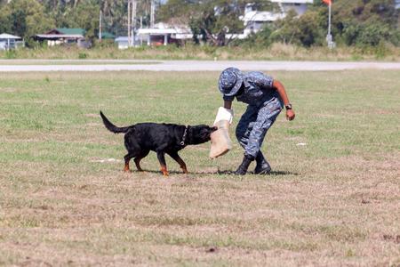 kampfhund: Soldaten aus der K-9 Hund Gerät arbeitet mit seinem Partner während einer Demonstration Ausbildung Lizenzfreie Bilder