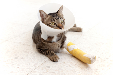 splint: cat wearing an Elizabethan collar and Cat leg splint sleeping on the floor.