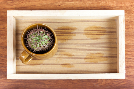 to get warm: cactus in coffee cup. it is idea beverage bad taste similar options like cactus. Drink hot smoke. Stock Photo