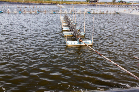 Paddle wheel aerator in Shrimp farming closed system. Supplying the Water with Fresh Oxygen. Natural Water Treatment.