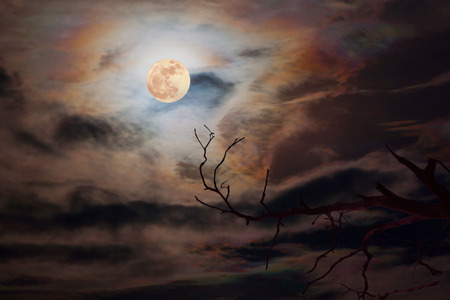full moon in dark sky background a silhouette and dry dead trees